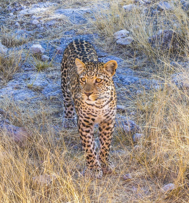 Pic of the Week: Face to face at Etosha National Park