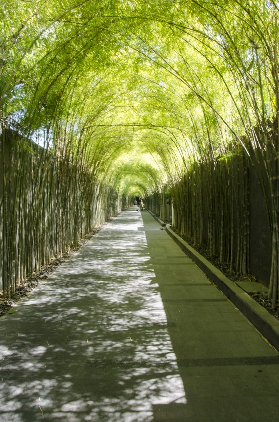 Bamboo tunnel at Jinneng Villas, Bali