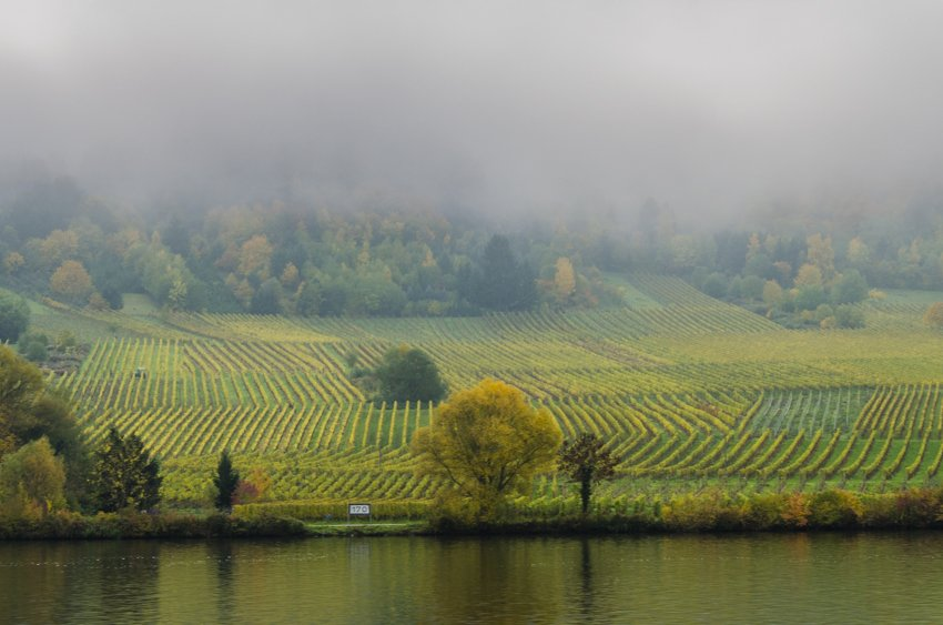 vineyards along the Moselle Valley covered in fog