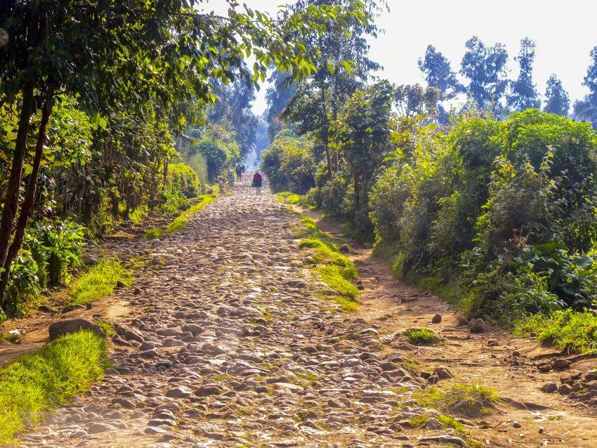 bumpy road, gorilla trekking