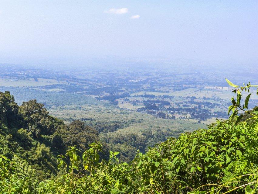 Parc National des Volcans, gorilla trekking
